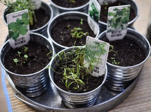 herbs-1309575_640